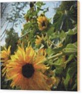 sunflower No.8 Wood Print