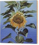 Sunflower Nodding Wood Print