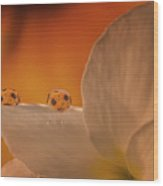 Sunflower On White Flower Wood Print