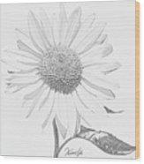 Sunflower  P Wood Print