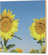 Sunflower Pair Wood Print