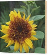 Sunflower Patch Wood Print