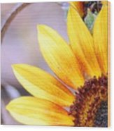 Sunflower Perspective Wood Print