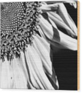 Sunflower Petals In Black And White Wood Print