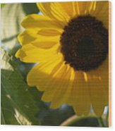 Sunflower Portrait With Leaf Wood Print
