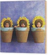 Sunflower Pots Wood Print by Anne Geddes