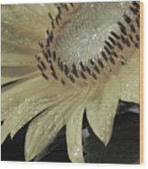 Sunflower Rain Wood Print