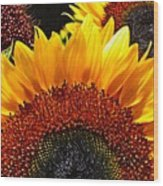 Sunflower Rise Wood Print
