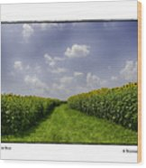 Sunflower Row Wood Print