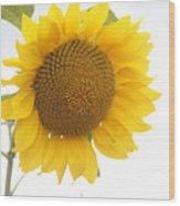 Sunflower Salutation  Wood Print