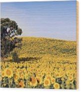Sunflower Sea Wood Print