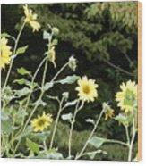 Sunflower Sea Of Happiness Wood Print