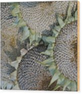 Sunflower Seed Heads Dried To Perfection Wood Print