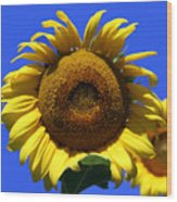 Sunflower Series 09 Wood Print