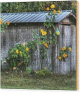 Sunflower Shed Wood Print