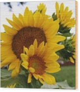 Sunflower Show Wood Print