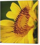 Sunflower Side Light Wood Print
