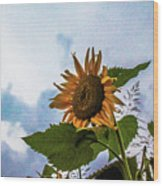 Sunflower Sky Wood Print