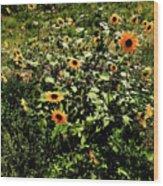Sunflower Stalks Wood Print