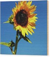 Sunflower Stand Alone Wood Print