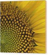 Sunflower Study Wood Print