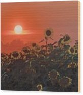 Sunflower Sundown Wood Print