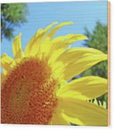 Sunflower Sunlit Art Print Canvas Sun Flowers Baslee Troutman Wood Print