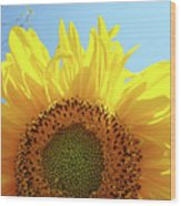 Sunflower Sunlit Sun Flowers Giclee Art Prints Baslee Troutman Wood Print