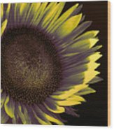 Sunflower Dawn Wood Print