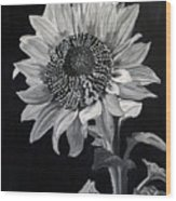 Sunflower Sutra Wood Print