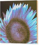 Sunflower Dusk Wood Print