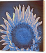Sunflower Moonlight Wood Print