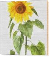 Sunflower Watercolor Wood Print