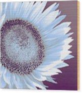 Sunflower Starlight Wood Print