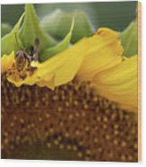Sunflower With Grasshopper Wood Print