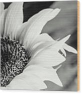 Sunflowers 16 Wood Print