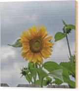 Sunflowers 2018-1 Wood Print