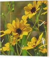 Sunflowers Along The Trail Wood Print