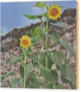Sunflowers And A Stone Wall Wood Print