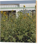 Sunflowers And Abandoned Gas Station Wood Print