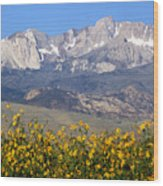 2a6742-sunflowers And Mount Humphreys  Wood Print