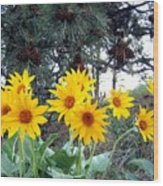 Sunflowers And Pine Cones Wood Print by Will Borden
