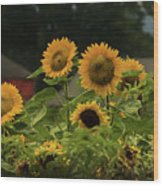 Sunflowers And Red Barn 3 Wood Print