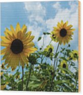 Sunflowers And The Bee Wood Print