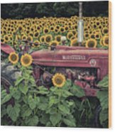 Sunflowers And Tractor Wood Print