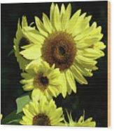 Sunflowers Art Yellow Sun Flowers Giclee Prints Baslee Troutman  Wood Print
