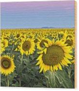 Sunflowers At Sunrise Wood Print