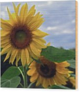 Sunflowers Close Up Wood Print