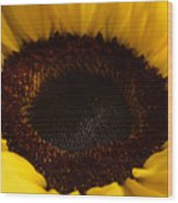 Sunflowers - Helianthus Wood Print