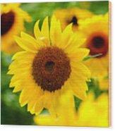Sunflowers I Wood Print